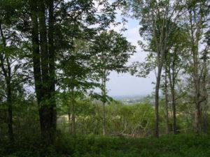 Hwy 231 view (9)
