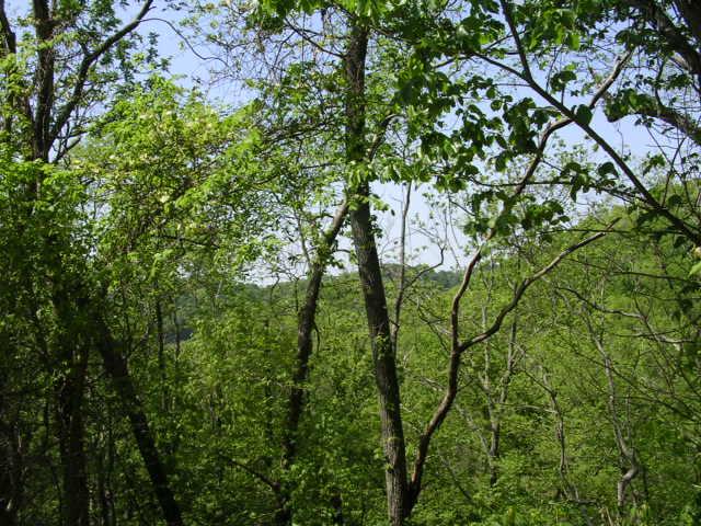 Sloan Branch (11)