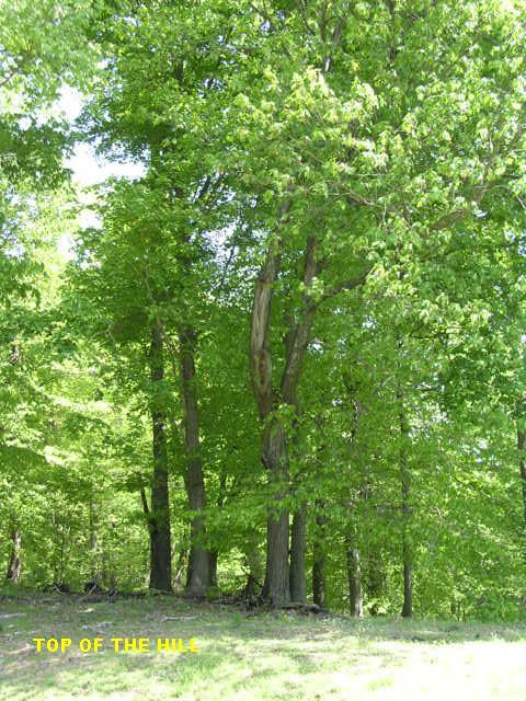 Sloan Branch (12)