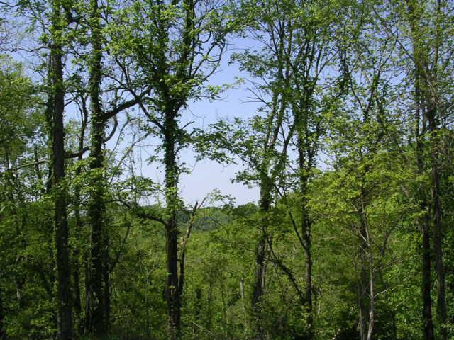 Sloan Branch (13)