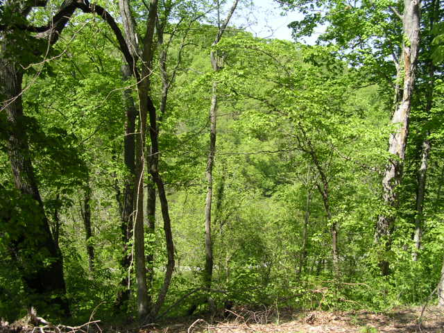 Sloan Branch (15)