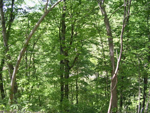 Sloan Branch (18)