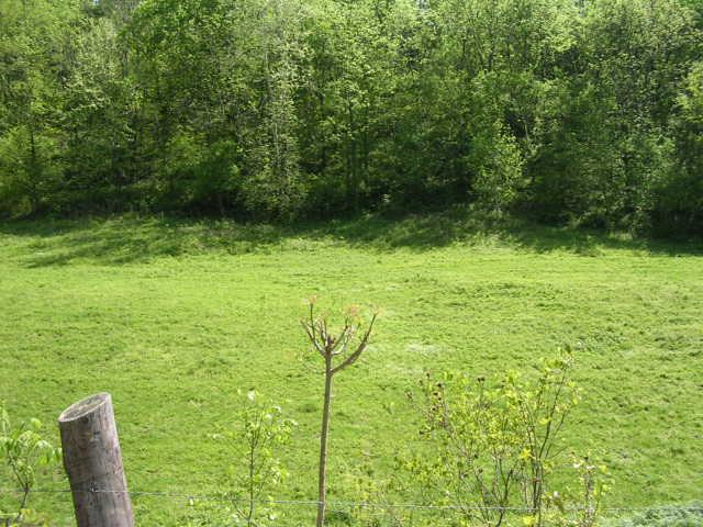 Sloan Branch (4)